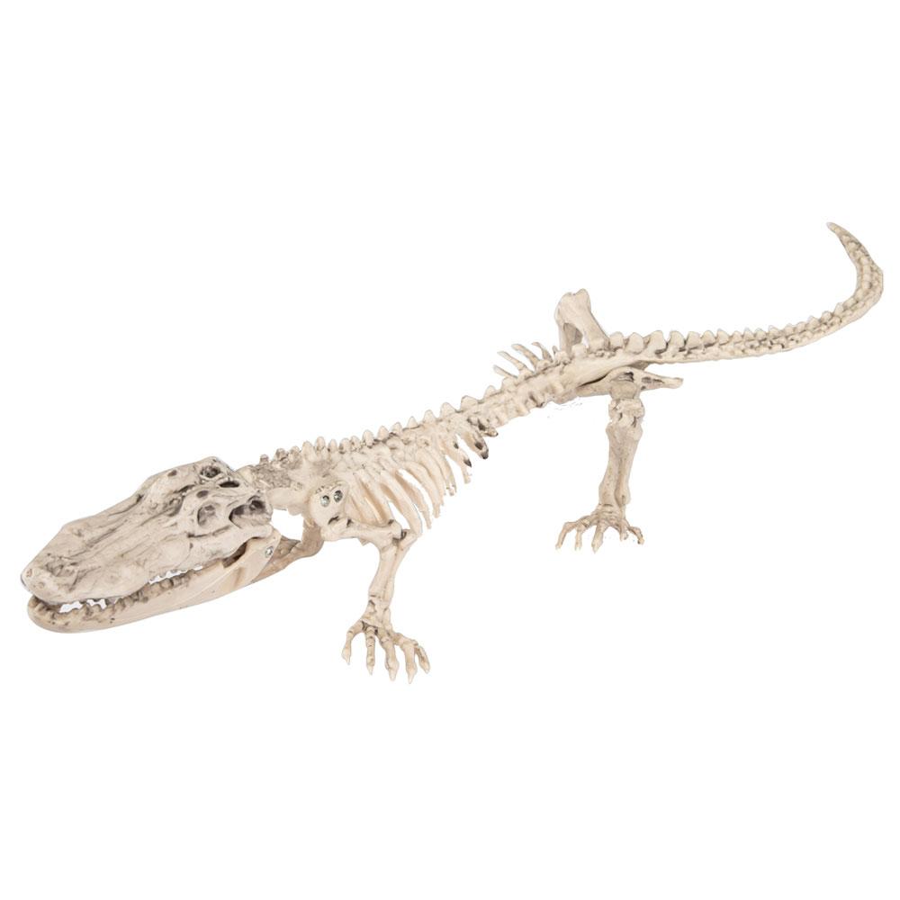 Krokodil Skelett Dekoration